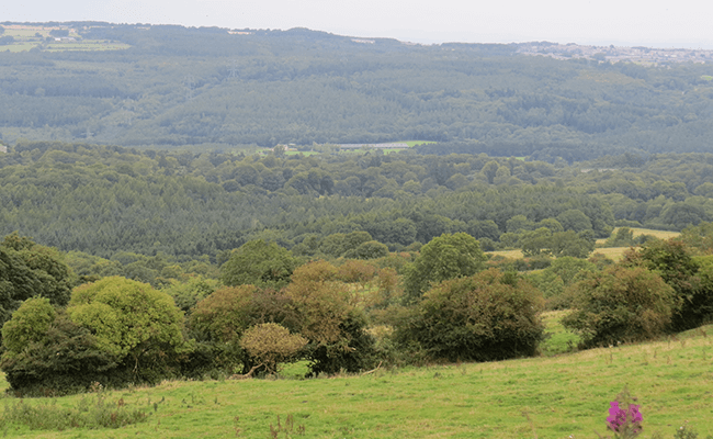 A view of the hills, near Stanley
